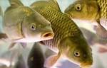 Создание рыбоводного комплекса в г. Озерске Челябинской области