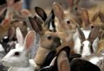 Создание сельскохозяйственного комплекса полного цикла по разведению кроликов в Чаплыгинском районе Липецкой области