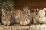 Создание высокоэффективного кролиководческого комплекса в Смоленской области