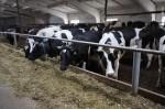 Строительство и создание молочно-животноводческого комплекса на 1200 коров на территории хутора Спорный Изобильненского района Ставропольского края