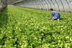 - 10% на сельскохозяйственный бизнес!